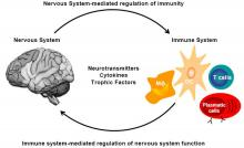 Interaction between the Immune system and the nervous system