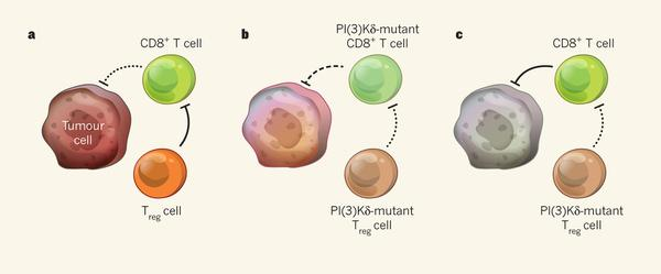 Inactivation of phosphoinositide-3-OH kinase δ as a possible cancer treatment in Nature this week